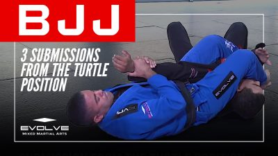 3 Submissions From The Turtle Position
